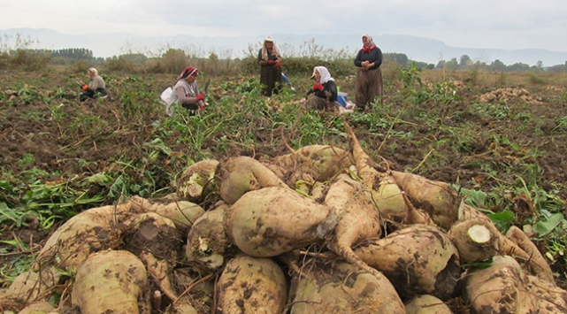 Pancar çiftçisi özelleştirme kurbanı