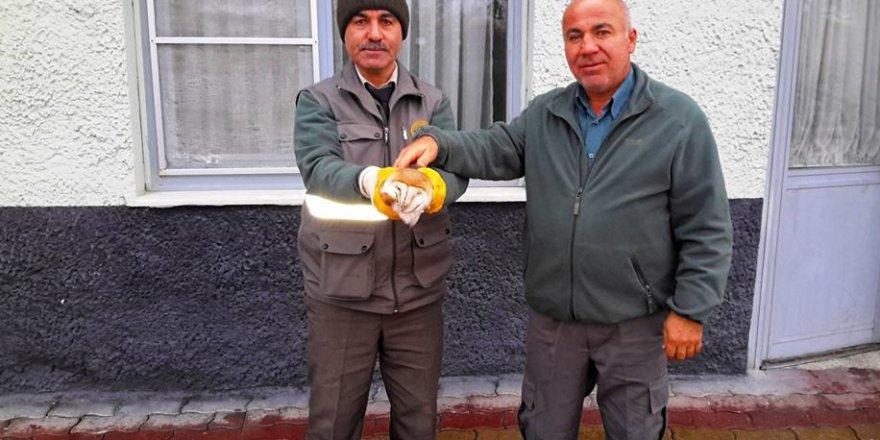 Karayolunda bulunan yaralı baykuş koruma altına alındı