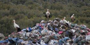 Soğuk hava leylek  sürülerini çöplüğe yöneltti