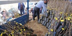 Hadim'de çiftçilere fidan dağıtıldı