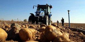 Türkiye patates fiyatı artışında dünya ikincisi