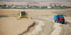 Buğdayda 20 milyon ton beklentisi