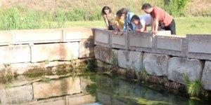 Su kaynaklarında yaşayan  endemik balıklar korunuyor