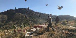 Doğaya 2 bin kınalı keklik salındı