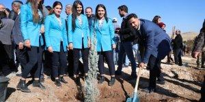 Mardin'de 243 bin fidan toprakla buluştu