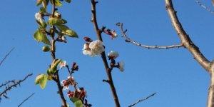 Yalancı baharın yalan çiçeği