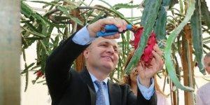 Akdeniz Üniversitesi Ziraat Fakültesi'nde tropik meyve hasadı