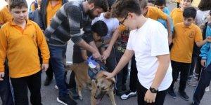 Okullara sahiplendirilen sokak hayvanları öğrencilerin ilgi odağı oldu