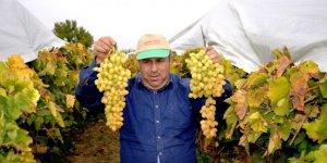 Üzüm üreticisi dünyaya açılmak için hava kargo istiyor