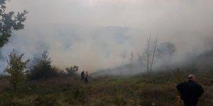 Altınova'da orman yangını