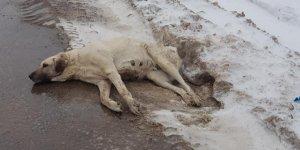 Yaralı halde bulunan köpek, tedavi altına alındı