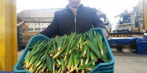 Toroslar'ın şifalı otu çiriş pazara indi