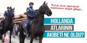 Hollanda atlarının akıbeti merak ediliyor