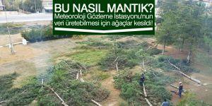 Meteoroloji gözleme istasyonunun veri üretmesi için ağaçlar kesildi