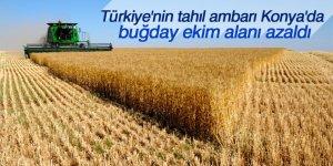 Konya'da buğday ekim alanı zzaldı