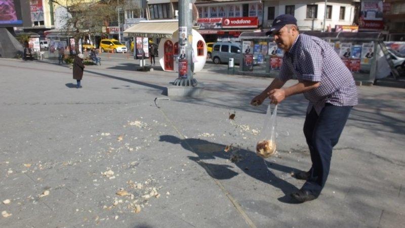 Burhaniye'de bayat ekmekler güvercinlere yem oldu