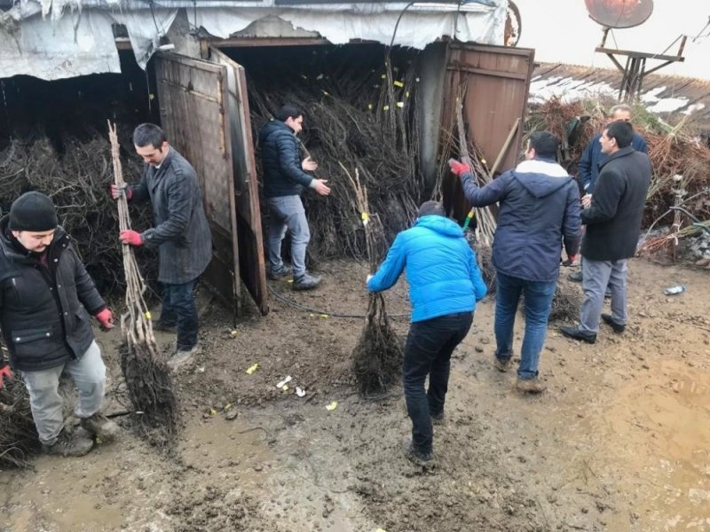 Yüksekova'da ceviz ve badem fidanı dağıtımı