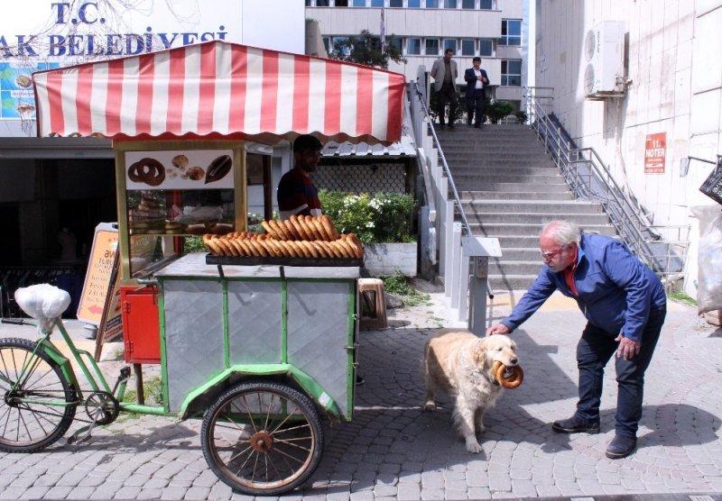 İzmir gevreği sevdalısı köpek Daisy