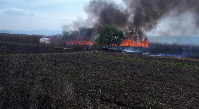 60 dönüm sazlık alan cayır cayır yandı