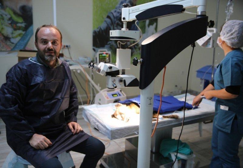 Mardin'de köpeğe katarakt ameliyatı yapıldı