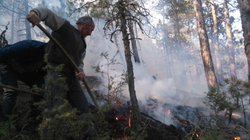 Bolu'da çıkan yangında 4 hektarlık orman zarar gördü