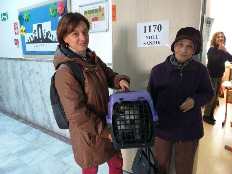 Oy kullanmaya kedisiyle beraber geldi