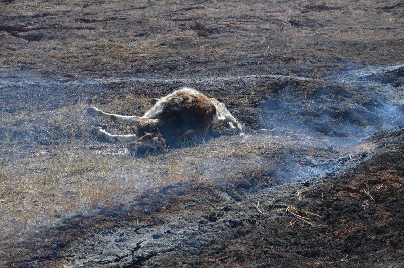 Maden hafriyat sahasında yangın