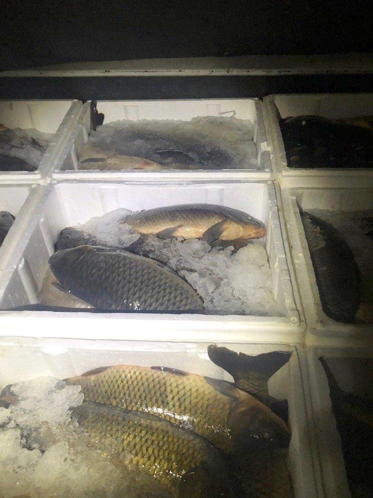 Kızılırmak'ta kaçak 2 ton sazan ele geçirildi