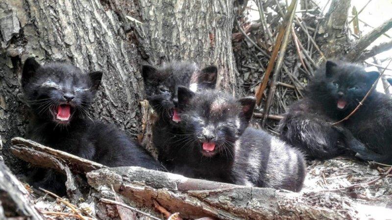 Yavru kediler söğüt ağacında mahsur kaldı