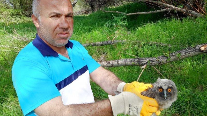 Yaralı puhu kuşu koruma altına alındı