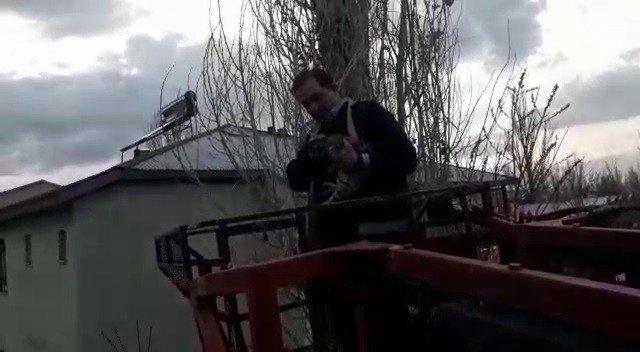 Ağaçta mahsur kalan kediyi itfaiye ekibi kurtardı