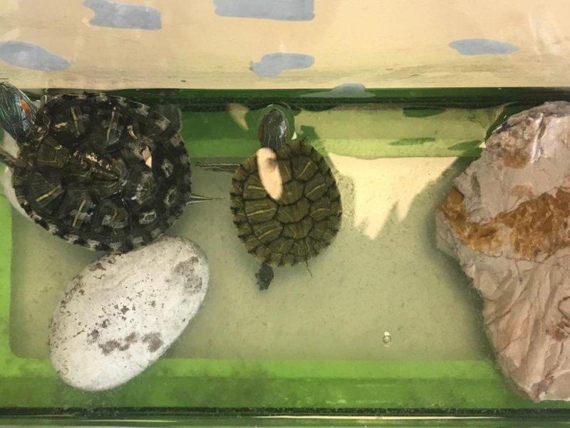Minikler, 23 Mayıs Dünya Kaplumbağalar Gününü kutladı