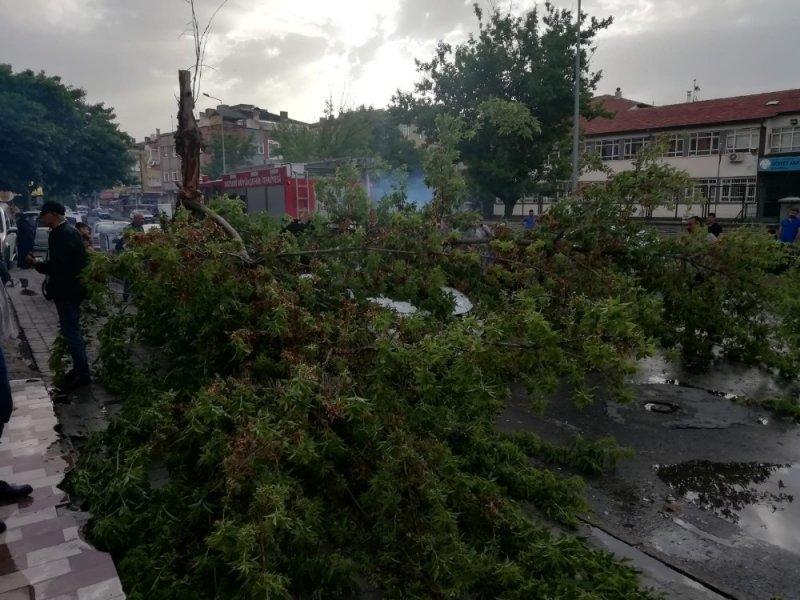 Rüzgardan devrilen ağaç otomobilin üzerine düştü