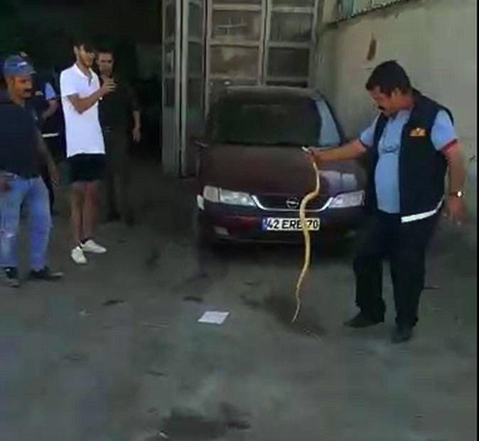 İtfaiyecilerin otomobile giren yılanla imtihanı