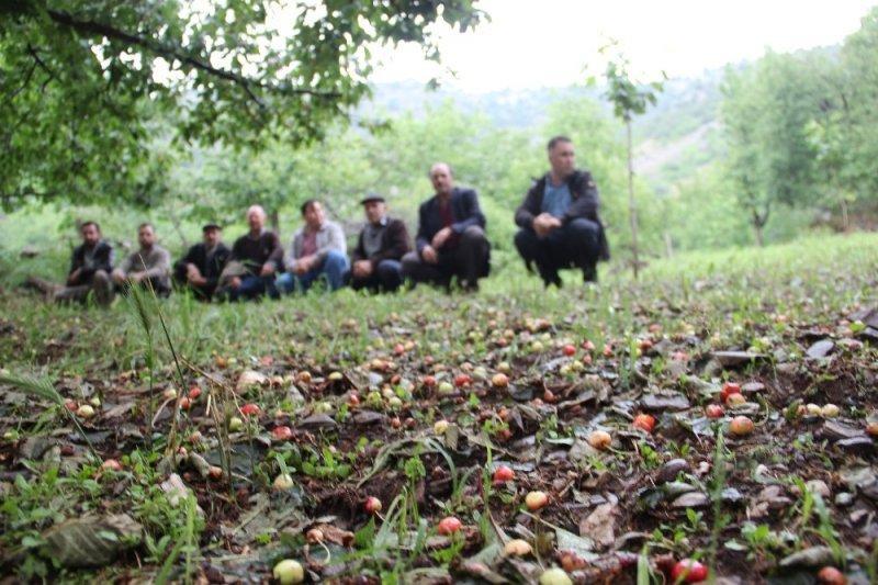 Aydın'da kiraz sezonu başlamadan bitti