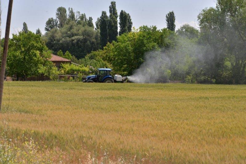 Buğday Ekili Alanlarda Süne Zararlısı İle Mücadele Tüm Hızıyla Devam Ediyor