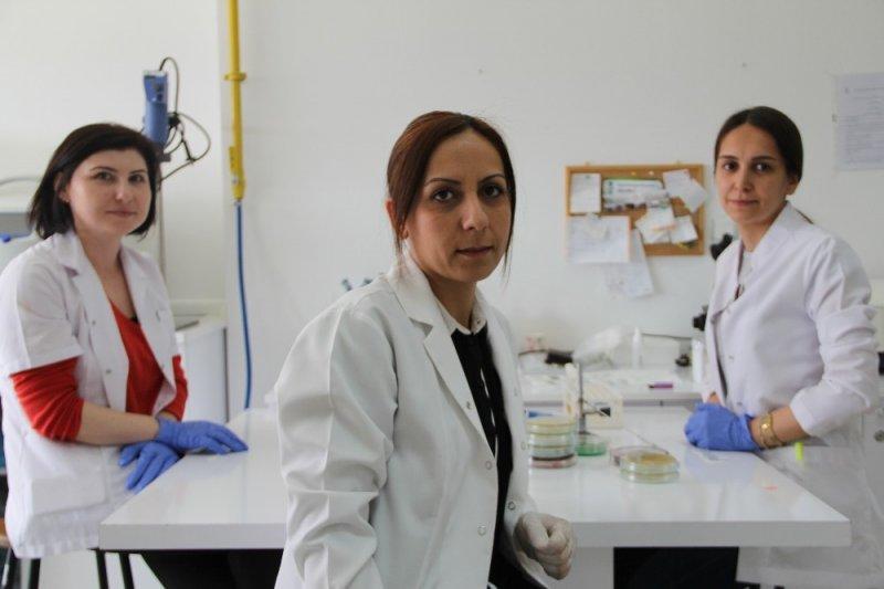 Artan kağıt maliyetlerine karşı bakteriyel selüloz ürettiler