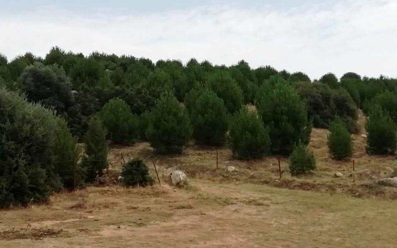 2011 yılında kurulan 'Aydın Ormanı'ndaki 14 bin fidan ürün vermeye başladı