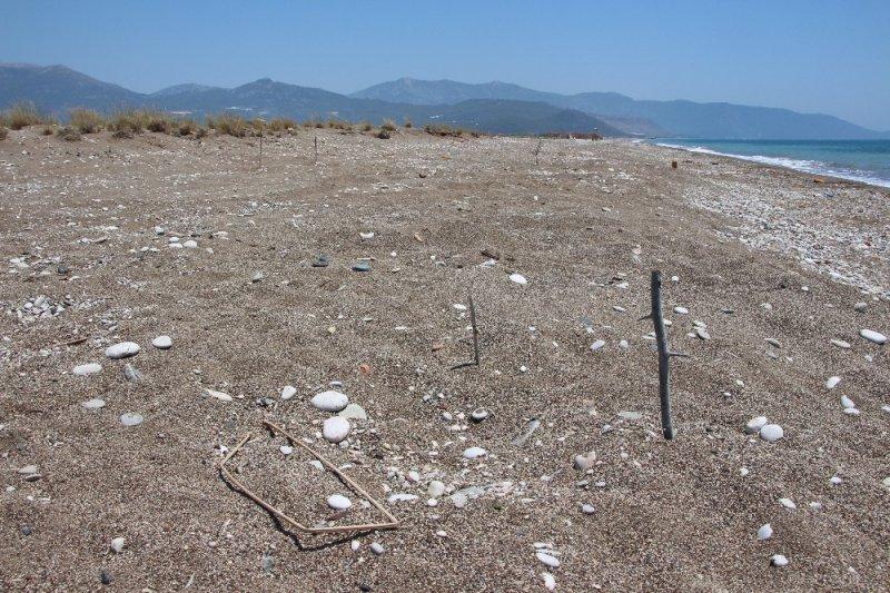Kaplumbağa yuvalarını sopa, kazık ve taşlarla işaretlediler