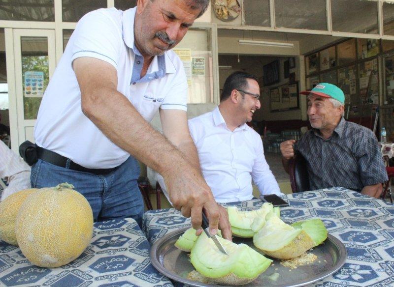 Bursa'da kavun hasadı başladı, fiyatlar yüzleri güldürdü