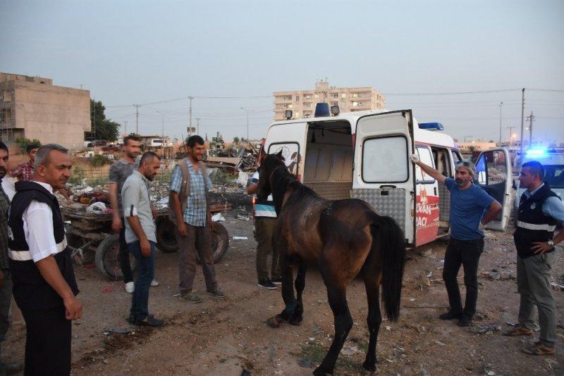 Yaralı at Mardin Hayvan Hastanesi'ne taşındı