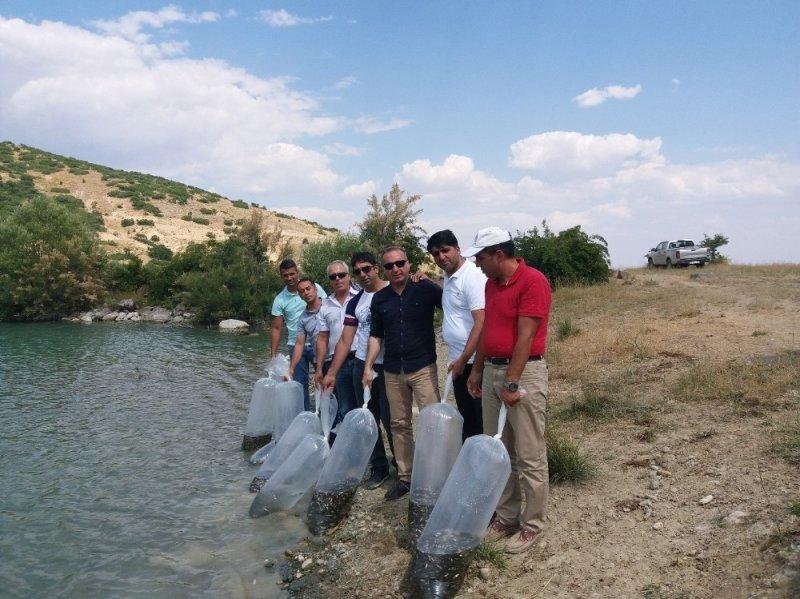 Tunceli'de gölete 50 bin pullu sazan yavrusu bırakıldı