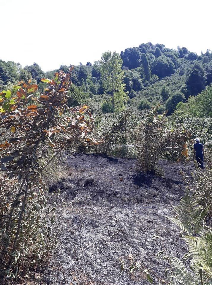 Alaplı'da üç dönümlük fındık bahçesi yandı