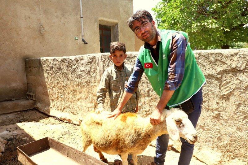 Yetim ailelere canlı hayvan desteği