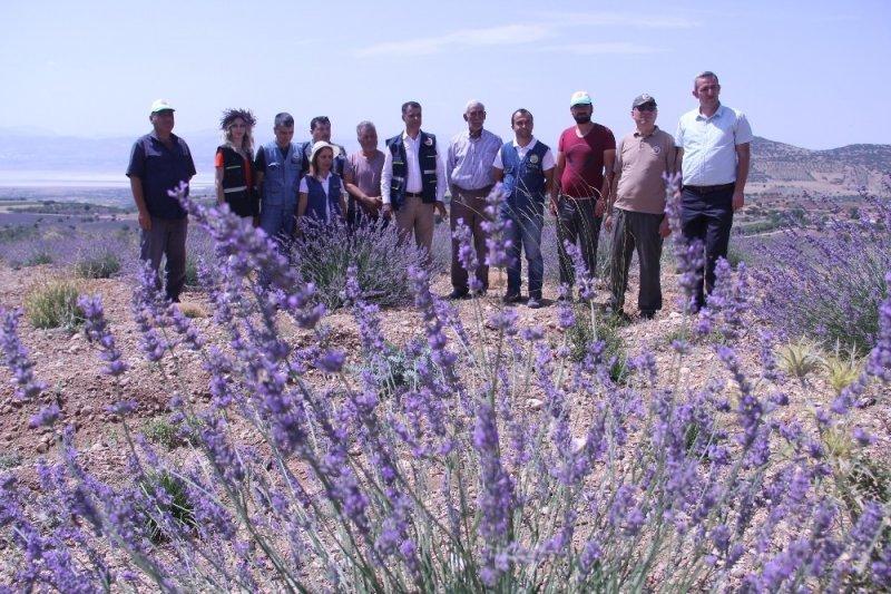 Isparta'da, OGM tarafından son 2 yılda 305 bin lavanta fidanı desteği sağlandı
