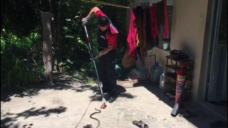 Zehirli yılanı karbondioksit gazıyla yakaladılar