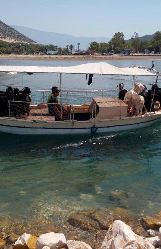 Demre'de kurbanlıklar tekne ile taşındı