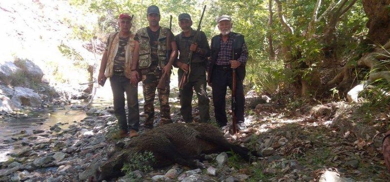 Karaman'da yaban domuzlarına karşı sürek avları devam ediyor