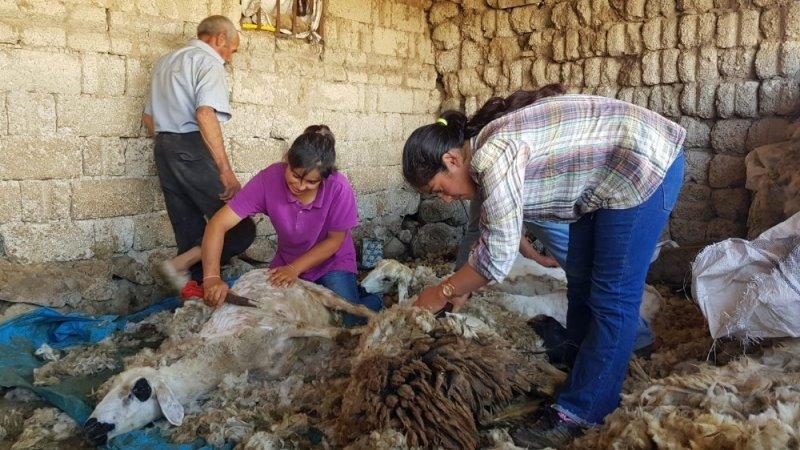 Kışın ders çalışıp yazın koyun kırkan Dilara elektrik elektronik mühendisliğini kazandı
