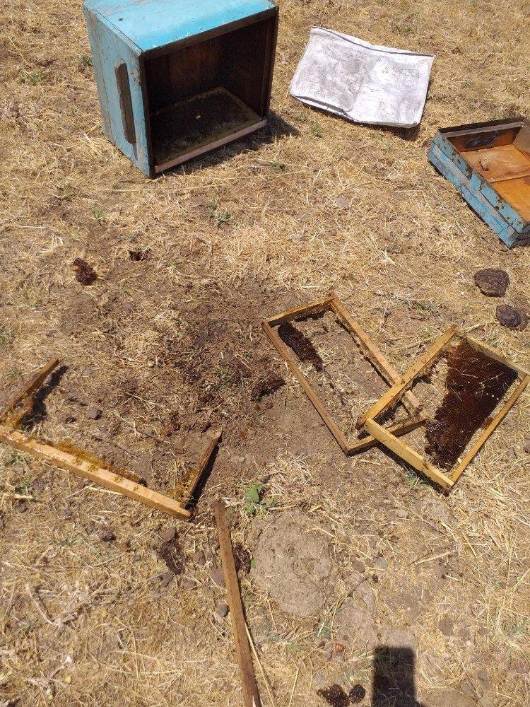 Ayılar, 8 arı kovanını parçaladı
